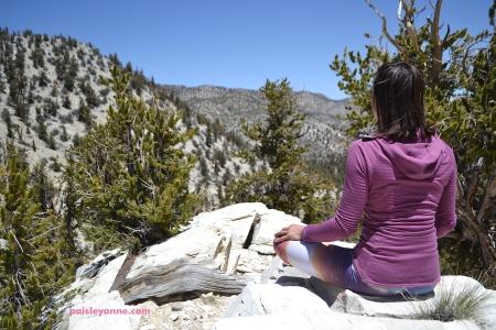 bristelcone_meditation