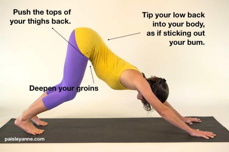 Leg actions in Downward Dog.